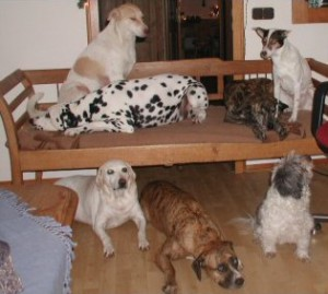Hundegruppenbild