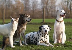 Hundegruppenbild1