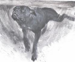 Hundschwimmend