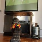 Lotte WM gegen Frankreich