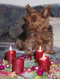 PinkyWeihnachten2009