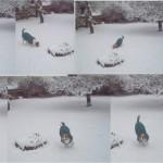 Winterlächeln5